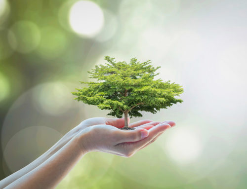 Growth & Operational Re-Design: Building a Sustainable Model